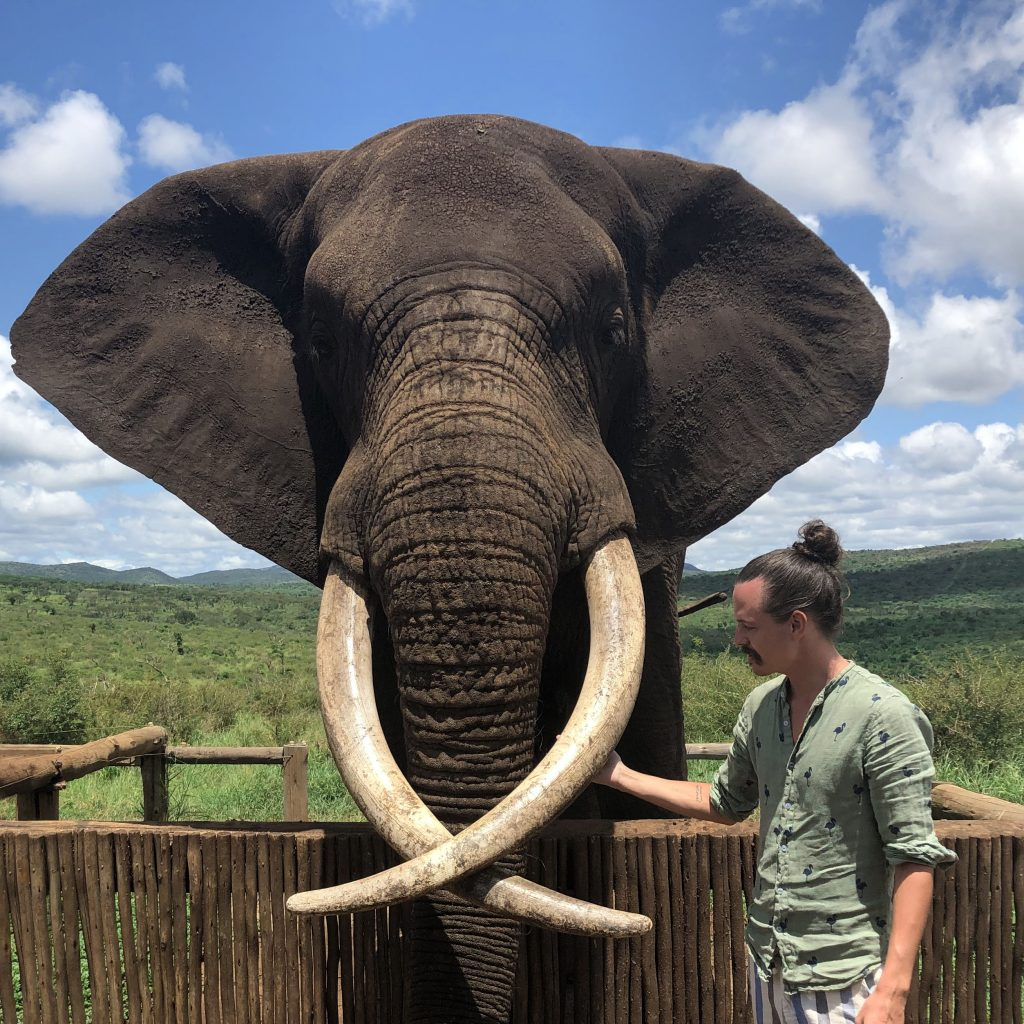 elefant bayete zulu game reserv