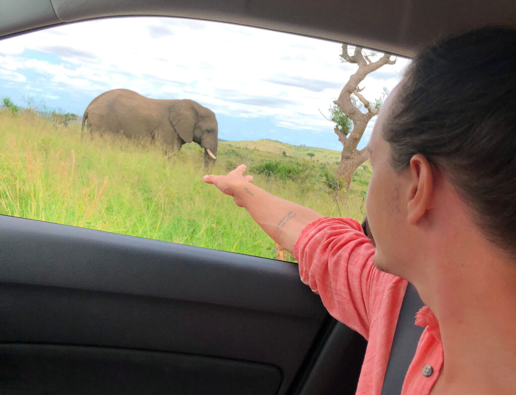 south africa elephants safari car hire private